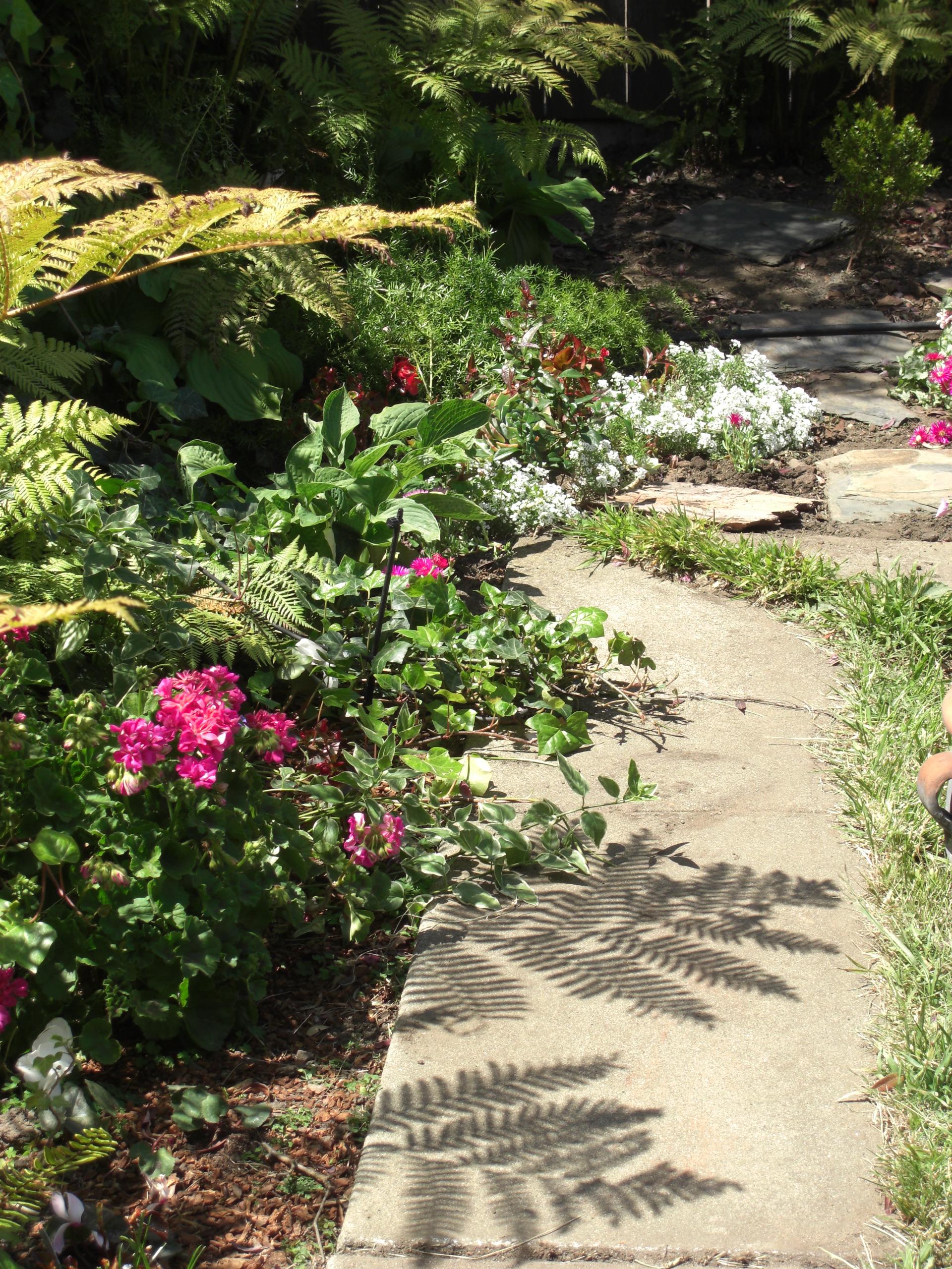 ferns_and_geraniums